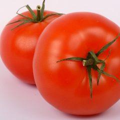 トマト (試験販売品目)